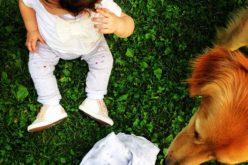 Come gestire con serenità l'arrivo di un neonato e la presenza di amici a quattro zampe in casa.