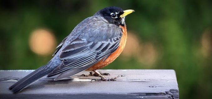 Corso di birdwatching