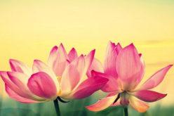 Mindfulness per gestire lo stress ed il dolore cronico