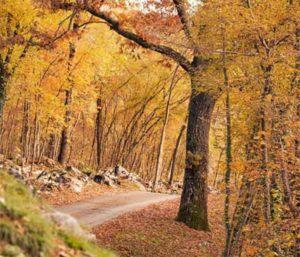 Castagnata a Serle @ Serle - rifugio Alpini | Serle | Italia