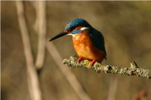 Corso di Birdwatching per principianti @ Museo di Scienze Naturali | Torre | Lombardia | Italia