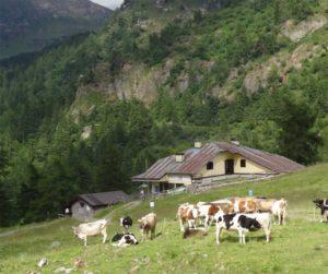Sull'alta via dei Sapori Camuni @ Residence La Splaza e della Pizzeria Valgrande | Casto | Lombardia | Italia