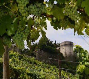Visita al Vigneto della Pusterla @ ingresso Vigneto | Brescia | Lombardia | Italia