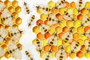 Le api salveranno il mondo @ La Libreria dei Ragazzi | Brescia | Lombardia | Italia