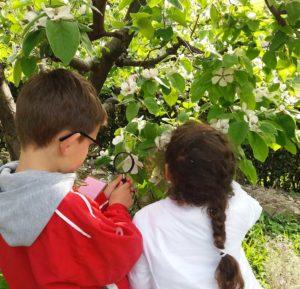 Tutti in natura @ Castello di Brescia | Brescia | Lombardia | Italia