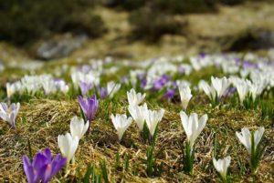 Passeggiata di Pasquetta in Val delle Messi @ ritrovo Casa Parco Adamello