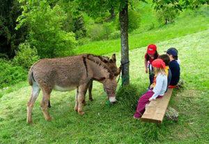 Attività con gli animali della fattoria @ Cascina Valsorda