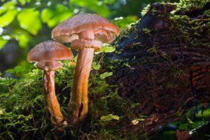 Passeggiata per la raccolta funghi @ Ritrovo partenza Seggiovia Valbione